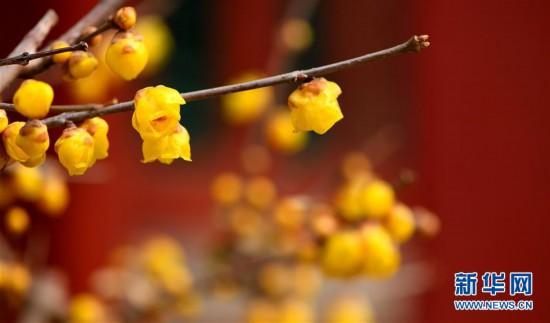 (XHDW)(1)故宫赏花