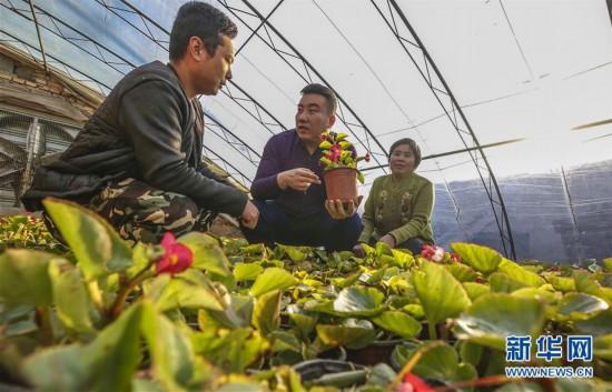 河北广阳:花卉产业铺就致富路