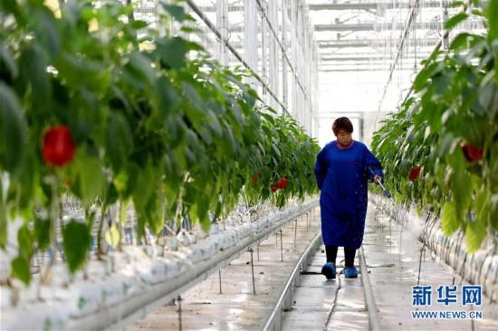(经济)(1)河北南和:现代高效农业助推乡村振兴