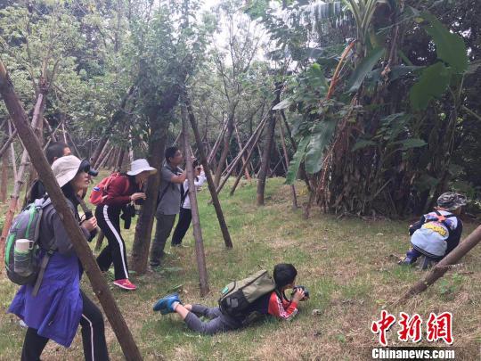 福建省观鸟协会在牛岗山公园进行观鸟活动。 郑江洛 摄