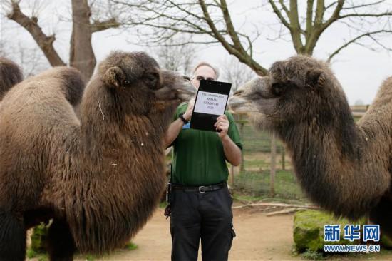 (国际)(1)伦敦动物园进行动物年度盘点