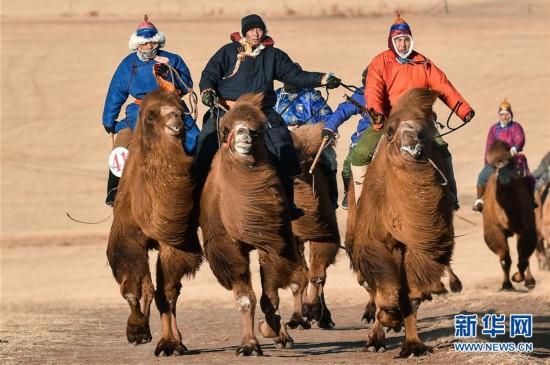 (体育)(1)冬季赛骆驼