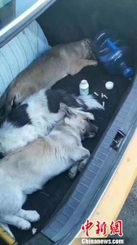 图为男子毒死3条小狗。警方供图