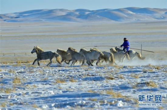 (社会)(5)马背民族雪原展绝技