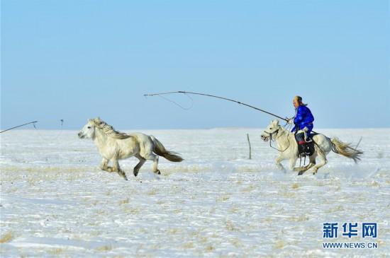(社会)(4)马背民族雪原展绝技