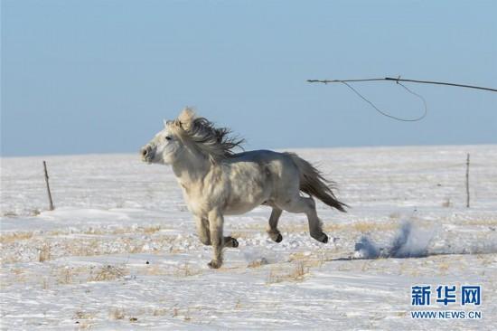 (社会)(10)马背民族雪原展绝技