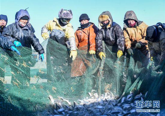 (社会)(1)达里诺尔湖上冬捕忙