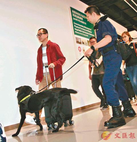 资料图:香港海关使用拉布拉多钞票搜查犬开展工作。图片来源:香港《文汇报》 记者 彭子文/摄