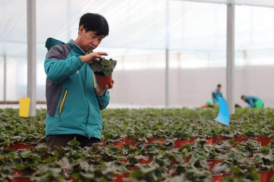 興慶花卉走上智慧科技的快車道