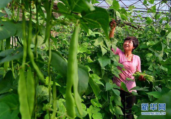 (社会)(1)特色种植促农增收