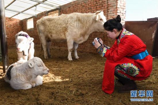 """(社会)(5)蒙古族姑娘返乡创业 记录牧区生活成""""网红"""""""