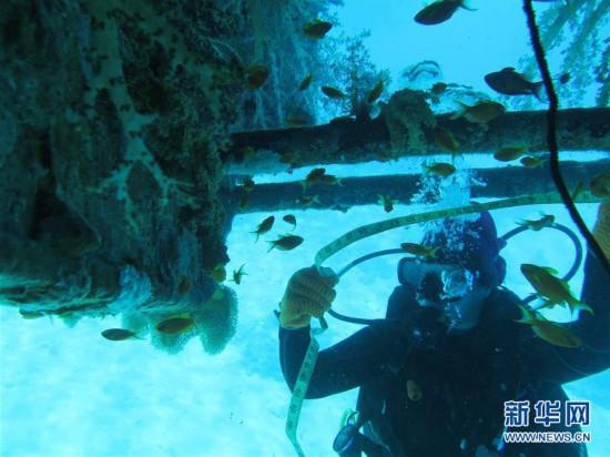 (国际・图文互动)(3)通讯:水下追梦――记埃及首位女性水下焊接工程师