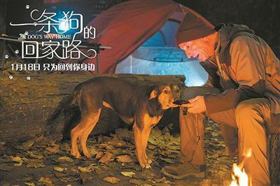 《一条狗的回家路》描绘念家情 查尔斯・马丁・史密斯执导