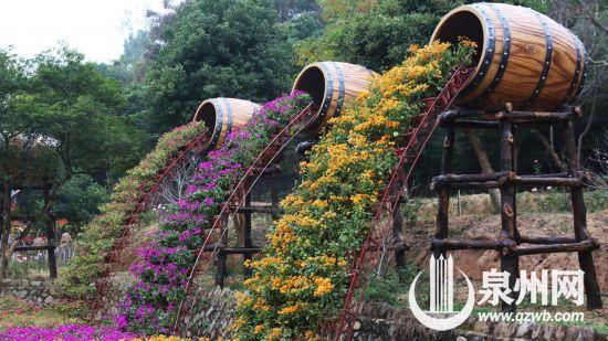 惊艳!泉州洛江河市镇的三角梅主题花海美极了