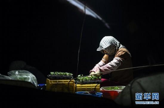 (经济)(2)宁夏中卫:设施蔬菜种植助力农民增收