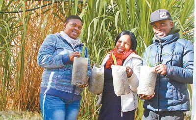 让更多莱索托农牧民走上致富路