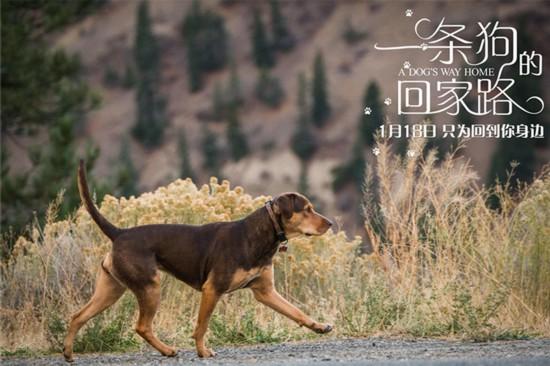 一条狗的回家路预售 开启人狗羁绊情深意长