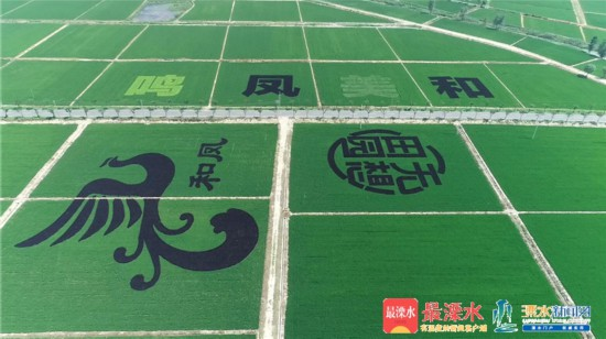 农业产业化 南京溧水建成高标准农田近48万亩