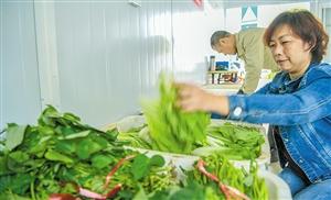 海南11个市县菜价下降 空心菜等菜种价格上涨
