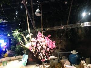 南京购物广场动物园动物越狱 树懒至今失踪