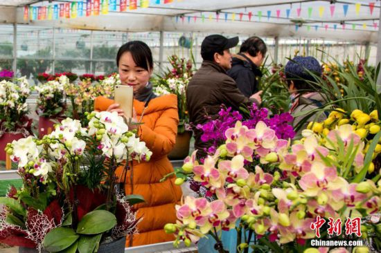 武汉迎春花市年味浓