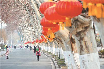 南京玄武湖公园梧桐树上挂满红灯 热烈喜庆