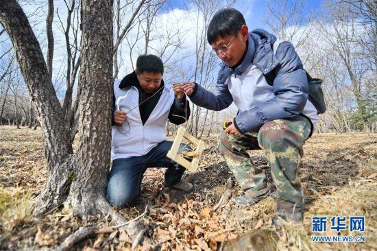 """(环境)(1)中俄巡护员""""同台竞技"""" 联手保护野生东北虎豹"""