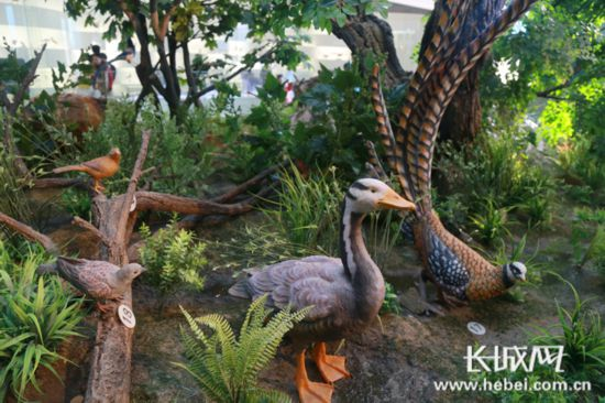 【冀网媒2019新春走基层】体验鸟儿飞翔学习鸟类知识――秦皇岛鸟类博物馆带你领略鸟的世界