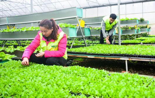在凯里市云谷田园现代高效农业园,工作人员在温室检查育苗情况。  本报记者  杨涛 摄