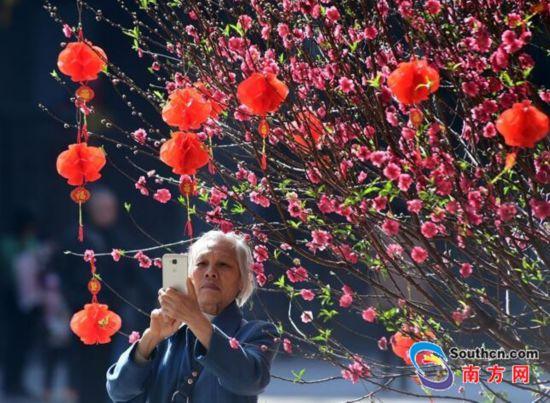 广州文化公园迎春花会除夕开幕 百花竞放羊城迎春