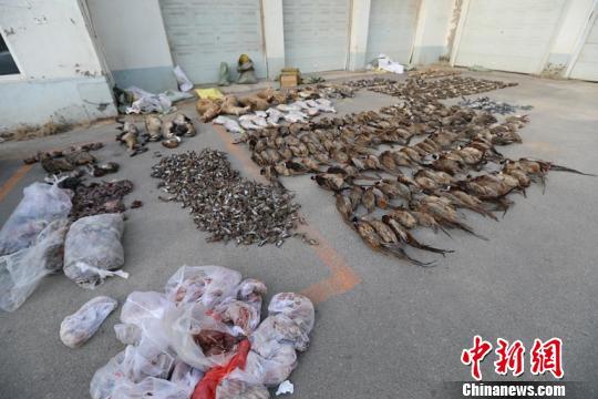 记者了解到,在专案组查获的野生动物死体中,包括国家二级保护动物