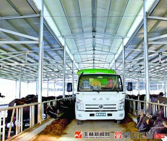 博白:发展水牛产业 助力乡村振兴