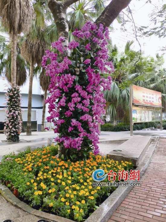 春节-元宵如何玩转漳州?看这里就够啦【组图】
