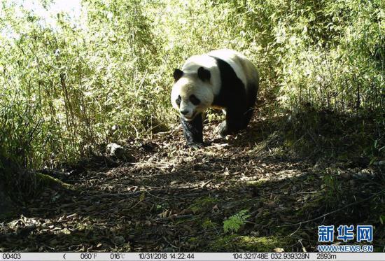 (环境)(1)甘肃白水江国家级自然保护区:野生动物种群稳中有升