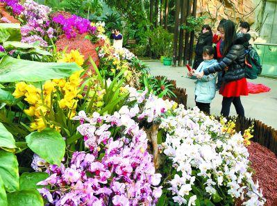 """植物园邀市民逛""""鲜花庙会"""""""