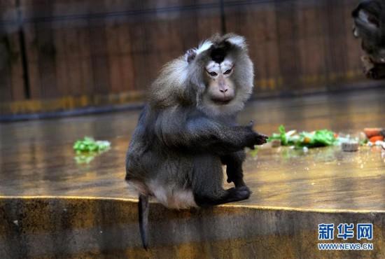 """动物园选猪年""""年度动物"""",扬子鳄为何上榜?--陕西频道"""