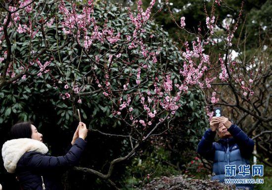 (社会)(1)上海:新春赏花游园乐