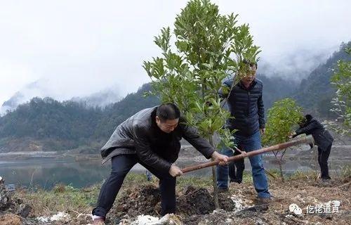 FC383838快讯:春寒料峭植树忙|道真开展春季义务植树活动