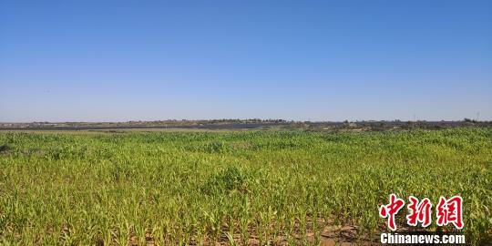 """异乡人甘肃""""压沙""""植树150万株:从播绿到助农增收"""