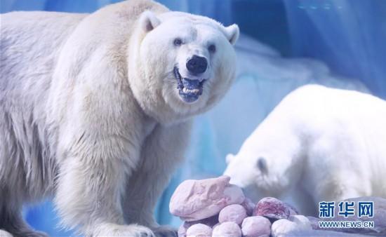 (環境)(1)北極熊歡樂度元宵