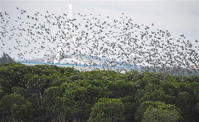 """""""鸟浪""""现身自然保护区"""