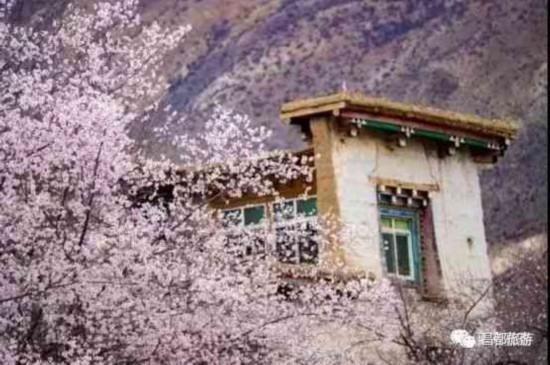 春风化雨,西藏昌都也有桃花盛景等你来!
