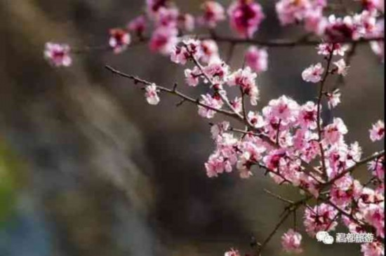 春风化雨,昌都也有桃花盛景等你来!