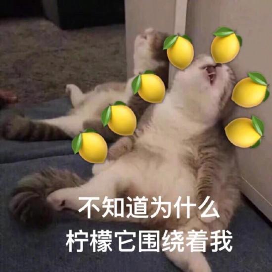 作为一只柠檬精,竟被张嘉倪和买超的爱情感动得�J甜!