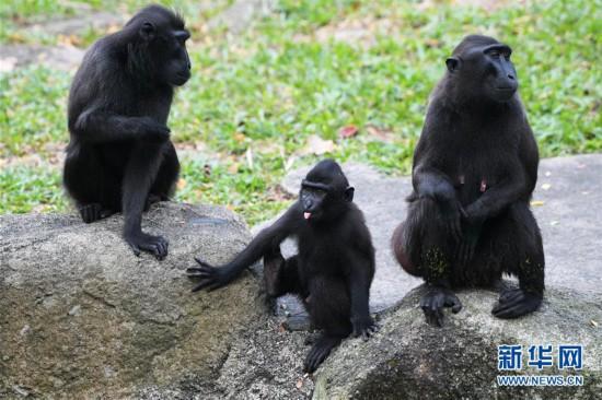"""新加坡动物园里的""""新生儿""""--陕西频道--人民网"""