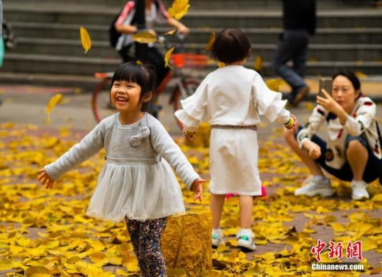 """广州春雨后现""""秋色"""" 黄叶满地"""