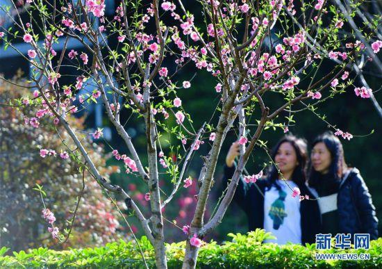 福州乌山风景区:花开春来早