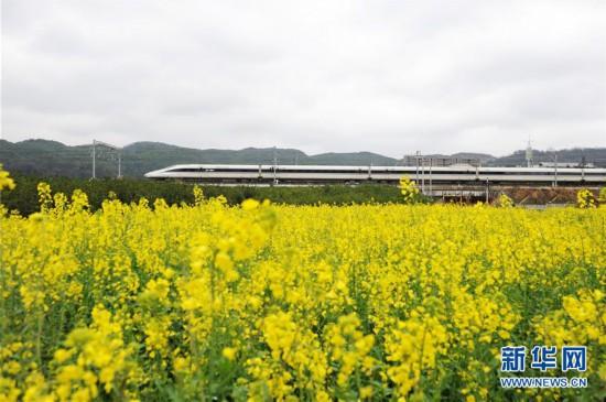 (社会)(2)开往春天的列车