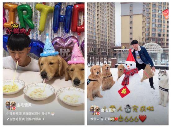火山小视频明星宠物聪明可爱萌哭千万用户网友:为啥我家是傻狗