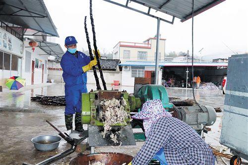 上林县:探索特色产业金点子 走上增收致富新路子